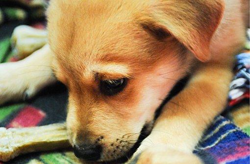 Smarty sucht noch ein neues Zuhause - seine Geschwister wurden bereits alle vermittelt.  Foto: PPFotodesign.com