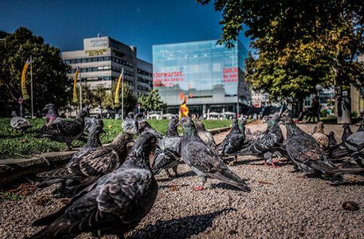Taubenfüttern soll wieder erlaubt sein