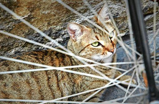 Katze gerettet, Gesundheit futsch