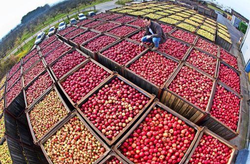 Ist das Obst erst einmal geerntet, ist die Saftproduktion energieintensiv Foto: dpa