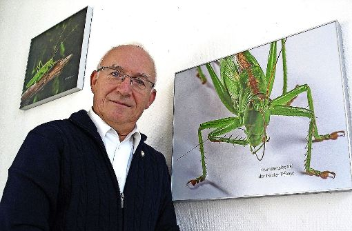 Ohrwurm, Weberknecht und anderen Insekten hat sich der Stammheimer Ulrich Behrend auf besondere Weise genähert. Der Industriefotograf im Ruhestand zeigt seine Bilder in der Bücherei. Foto: