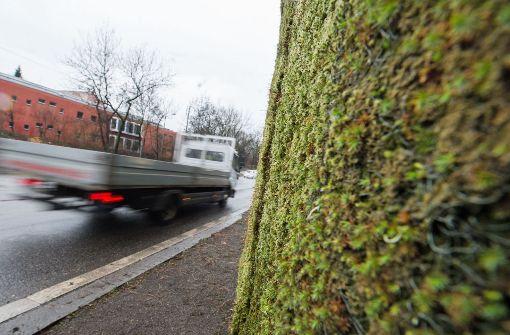 Auch Tübingen setzt auf Mooswand gegen schlechte Luft