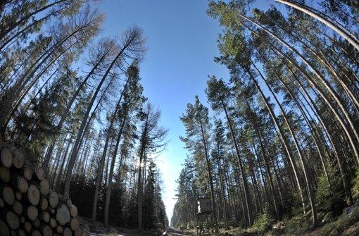 Naturschützer bitten Kretschmann um Hilfe