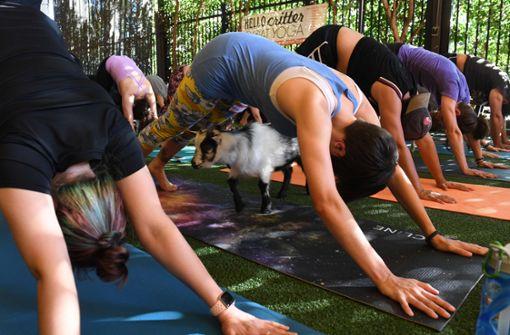 Die lustigsten Yoga-Videos der Welt