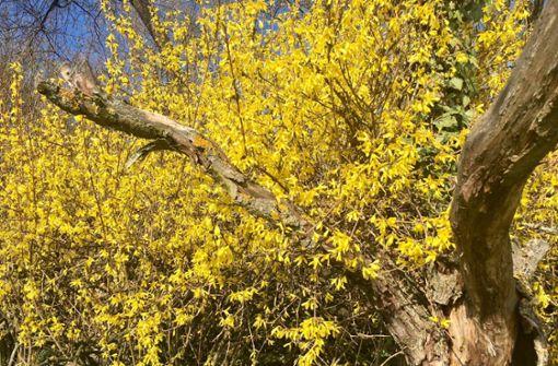 Frühling und Tod