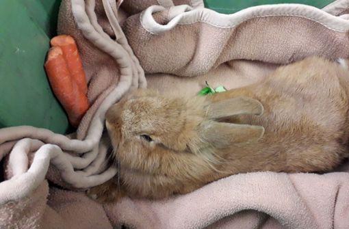 Ausgebüxtes  Kaninchen vom Kräherwald ist wieder daheim