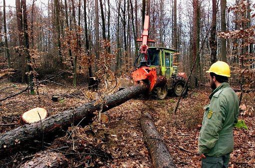 Wald wird  zur Sicherheitszone