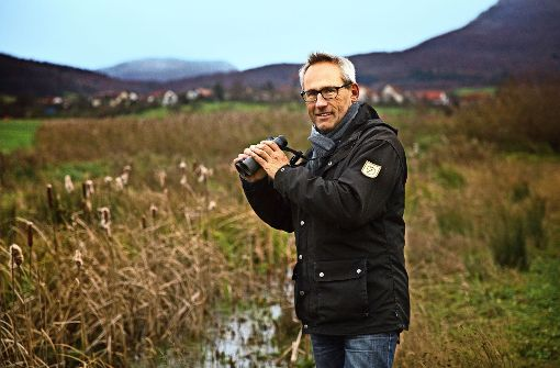 Wasserbüffel als Landschaftspfleger