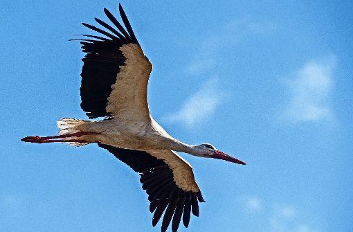 Auch der späte Storch findet noch ein Nest