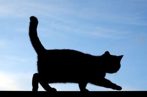 Katze vermutlich mit Säure übergossen