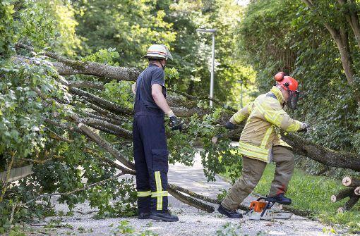 Baum  stürzt auf Radweg