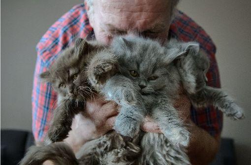 Gefährliche Gifte in Katzen entdeckt