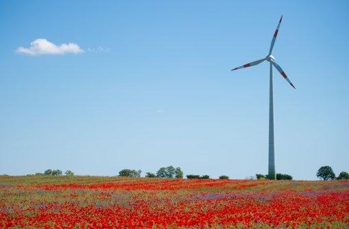 Windkraft kontra Vogelschutz