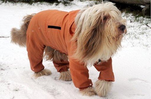 Was für ein Wetter: Selbst Chilly trägt beim Gassigehen in Stein bei Laboe (Schleswig-Holstein) einen wetterfesten orangen Anzug. Nur die Pfoten liegen blank. Auch am Wochenende sollte der Bearded Collie sich warm anziehen: Das Wetter bleibt winterlich. Foto: dpa