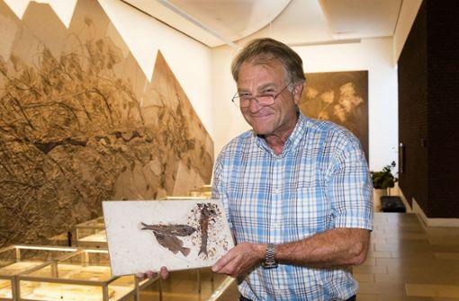 Rolf Bernhard Hauff präsentiert die Meisterwerke des Präparators Uwe Eller im Urweltmuseum in Holzmaden.  Foto: Ines Rudel
