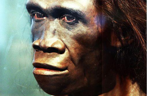 Älteste Spuren des Frühmenschen außerhalb Afrikas entdeckt