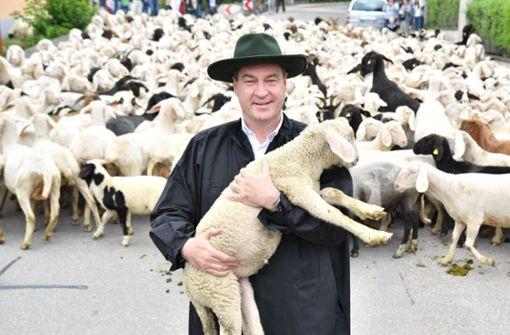 Der bayerische Ministerpräsident Markus Söder beim Lammauftrieb im Altmühltal. Foto: Screenshot Twitter/Markus Söder