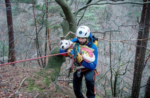Bergwacht rettet abgestürzten Hund