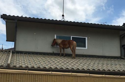 Kleines Pony harrt tagelang auf Hausdach aus