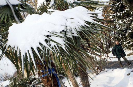 Damit empfindliche Pflanzen nicht erfrieren