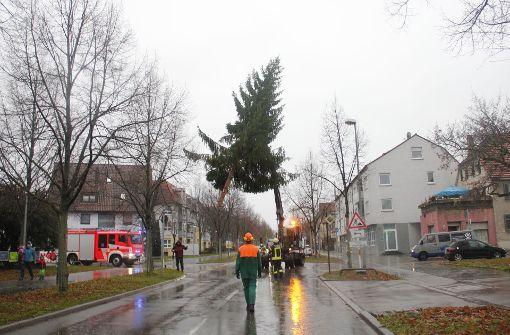 Ein Tannenbaum schwebt  über der   Solitudestraße