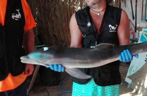 Selfie-Fans verursachen Tod von Baby-Delfin