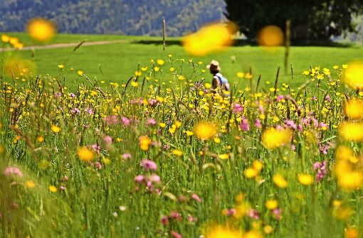 Naturschützer forden eine Million Euro