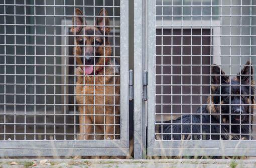 Diese Schäferhunde fristen derzeit ihr Dasein im Böblinger Tierheim.  Foto: dpa
