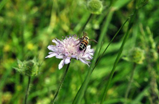 Am west-östlichen Rand des Naturschutzgebietes Greutterwald entsteht ein Paradies für Wildbienen. Foto: Georg Linsenmann