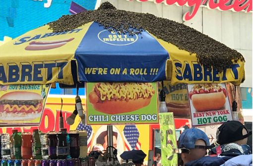 Tausende Bienen belagern Hotdog-Stand am Times Square