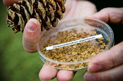 5000 Mammuts aus federleichten Samen