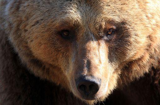 Dänischer Zoo tötet zwei Braunbären