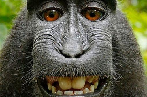 Streit um Rechte eines Affen am Bild beigelegt