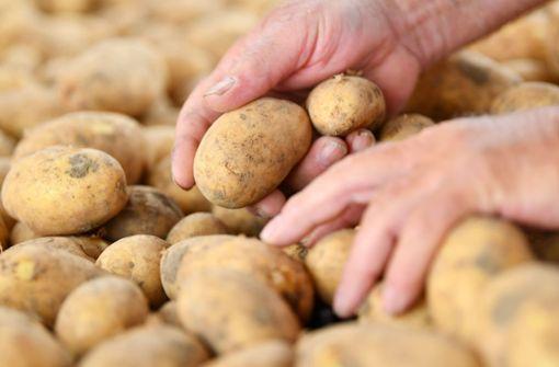 So hat sich die Dürre auf Kartoffeln ausgewirkt