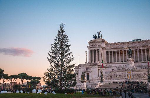 Ein Weihnachtsbaum mit inneren Werten