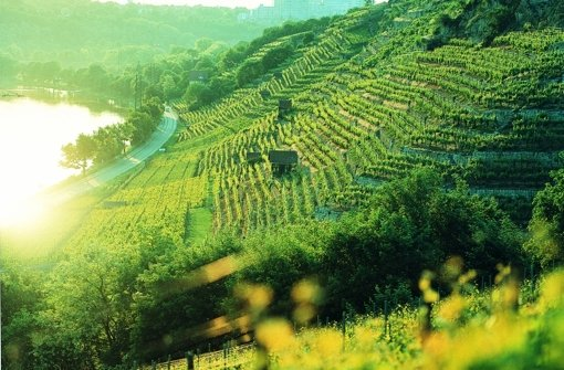 Promis trinken Cannstatter Wein