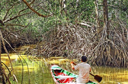 Bootstour zu Affen, Schlangen und Krebsen