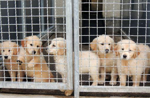 Nach illegalem Tiertransport fast alle Hunde vermittelt