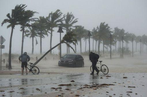 """Sheriff in Florida: """"Schießen Sie nicht auf 'Irma'"""""""