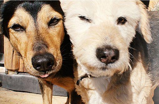 Hohe Nachfrage bei  Hundekot-Tüten