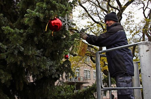 Eine zehn Meter hohe Fichte läutet die Weihnachtszeit ein