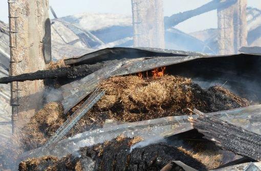 Der Kamelhof nach dem Feuer. Foto: dpa