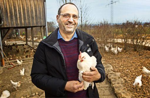 Die Hühner sind für Ostern in Hochform