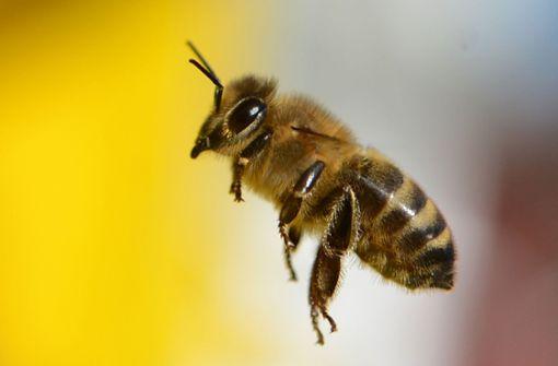 Was ist dran am Krieg der Bienen?
