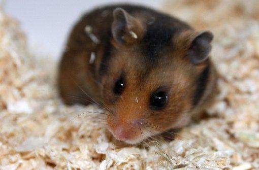 Youtube: Das sind die beliebtesten Hamster-Videos - PetContent ...