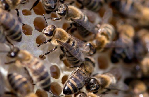Wo der Nektar hinkommt: im Bienenstock  Foto: dpa