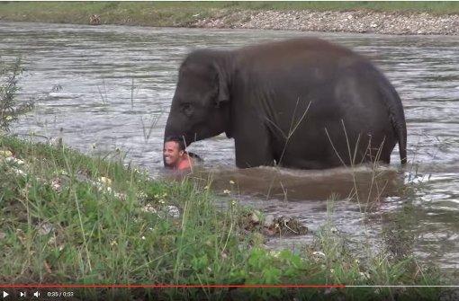Elefant zieht seinen Pfleger aus dem Fluss