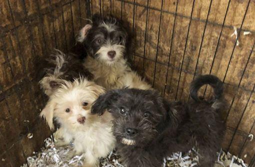Polizei findet 44 gefrorene Hunde