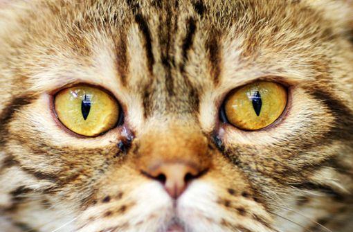 Hunde haben ein Frauchen oder Herrchen, Katzen haben Personal. Jeder, der mit Katze(n) zusammenlebt, wird dies bestätigen. Katzen haben sich trotz Domestizierung ihren Stolz, Eigensinn und ihre Unabhängigkeit bewahrt. Unterwürfiges Verhalten ist ihnen fremd. Foto: dpa