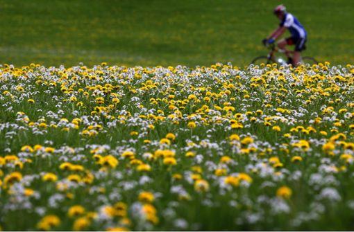 Ein Umweltsünder namens Gras